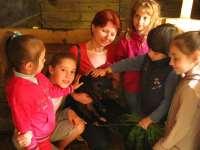 Детский лагерь Friends Izki Land Карпаты/с. Изки